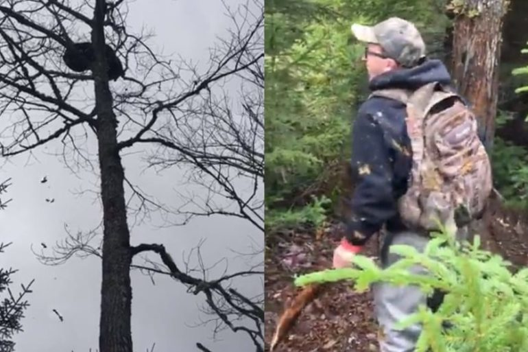A man in a helmet and backpack climbing a tree in the woods