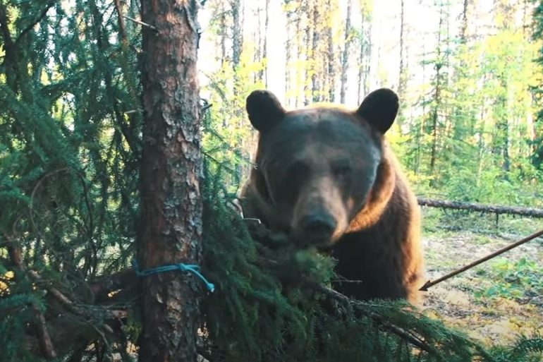 A bear in a forest
