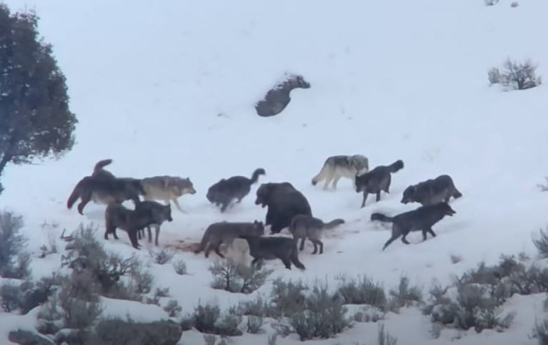 A group of animals in the snow