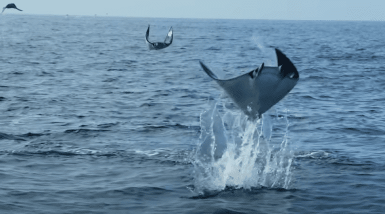 A whale jumping out of the water