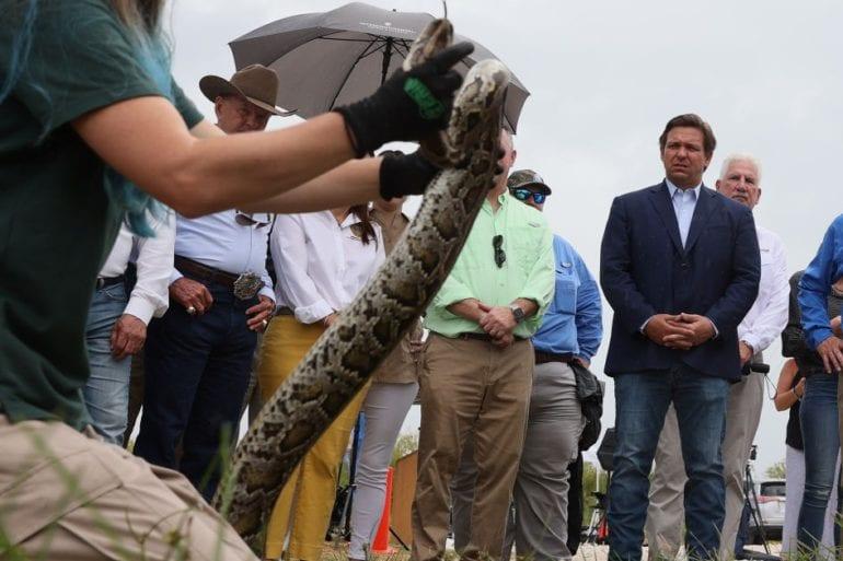 Ron DeSantis holding a large lizard