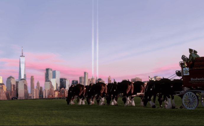 A person driving a tractor with a herd of cattle in a field with a city in the background