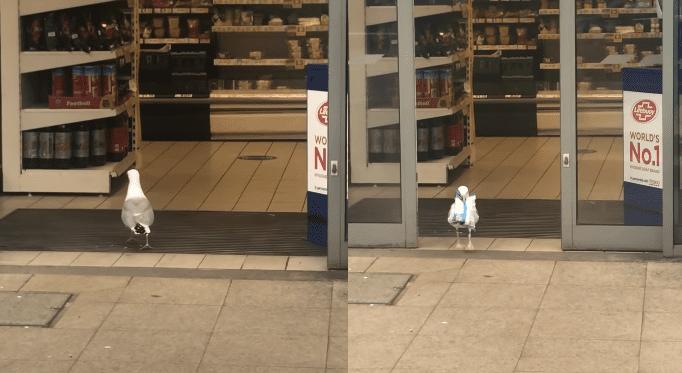 A white bird on a sidewalk